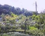 20060813_極楽寺2.jpg