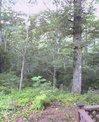 20060814_山中湖1.jpg