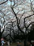 20090404_新宿御苑05.jpg