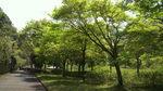 20100502_三保ダム周辺03.jpg