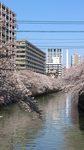 20120407_目黒川.jpg