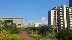 20120805_東品川海上公園2.jpg