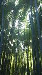 20121103_報国寺.jpg