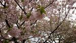 20140413_新宿御苑.jpg